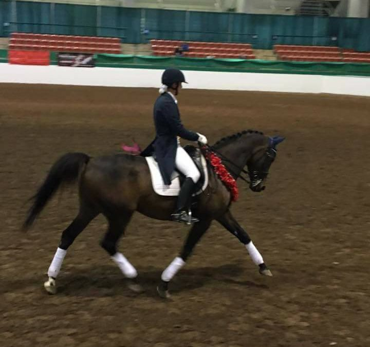 Confirmed FEI Horse – SOLD
